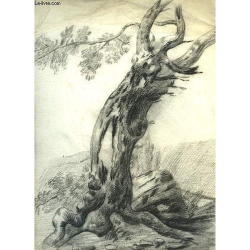 Dessin original au fusain d 39 un tronc d 39 arbre pench vers - Dessins d arbre ...