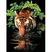 "Royal & Langnickel Pjs57 Peinture Au Num�ro 11""X 15"" Tigre Assoiff�"