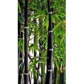 10 Graines Seeds De Bambou Noir - Phyllostachys Nigra - Rare ! Peu Tran�ant Et Rustique.