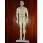 Mannequin D'acupuncture Homme-50cm