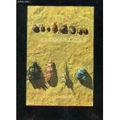 Les Coquillages Les Gasteropodes Marins. de J.MARCY