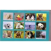 I F A W Calendrier 2011 - Campagne Pour Les Sanctuaires Animaliers - 12 Photos , 28x22 Cm Environ