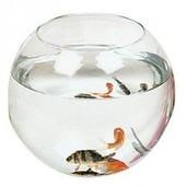 Aquarium Boule Zolux 4,5 Litres