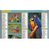 Almanach Du Facteur 2007 La Poste - Seine & Marne 77 - Recto Verso :Oiseaux Exotiques - Oberthur