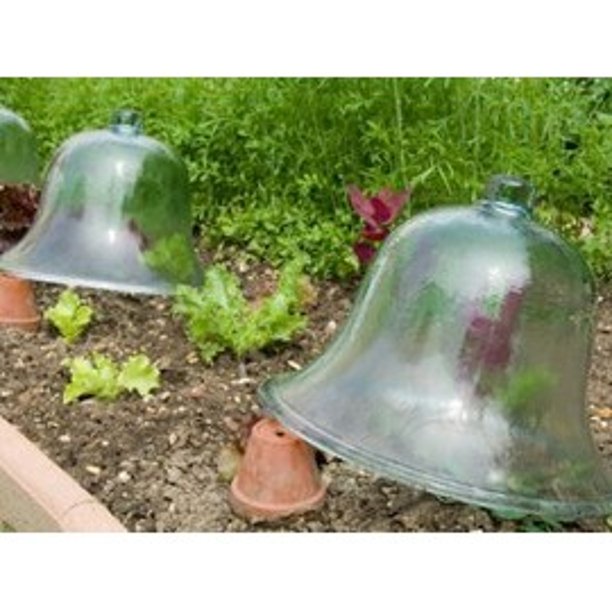 Decoration jardin d 39 occasion 95 vendre pas cher - Cloche de jardin en verre ...