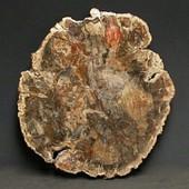 Bois Fossile Tranche Polie 2 Faces