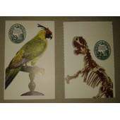 2 Billets Tickets Museum D'histoire Naturelle Pal�ontologie/Anatomie Compar�e Et Grande Galerie De L'�volution Allosaurus Etperruche Cornue
