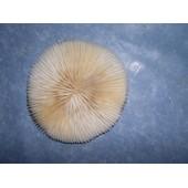 Corail Mort Pour D�coration D'aquarium Ou Autre- Diam�tre 10