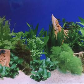 1 Metre Image, Fond Daquarium Decors Poster Fond Bleu Sable Blanc Plante Aquarium 60 Cm De Haut
