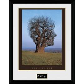 Pink Floyd Poster De Collection Encadré - Tree (40x30 cm)