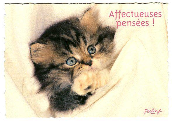 """Carte Postale - Feeling - """" Affectueuses Pensées ! """"   Rakuten"""