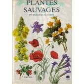 Plantes Sauvages de Eliska Tomanova