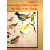 Bruits - Oiseaux Des Champs, Des Jardins, Des Bois Et Des �tangs, Alouette, Faucon Cr�cerelle, Pic Vert, Troglodyte, Corneille, Poule D'eau, Chouette Hulotte, Hibou Scops, M�sange � T�te Bleue... - Le Royer, Michel