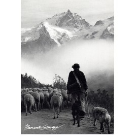 73 un certain regard photographe bernard grange berger chien moutons - Photographe guilherand granges ...