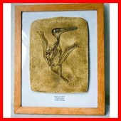 Cadre Moulage Fossile Pterodactyle Kochi Dinosaure