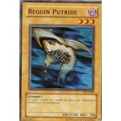 Requin Putride - Vf