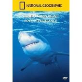 National Geographic : Grand Requin Blanc Sous Surveillance de National Geographic