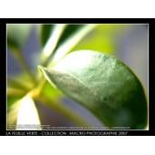 Coloriage Anti Stress Nature Et Decouverte.Nature Anti Pas Cher Ou D Occasion Sur Rakuten
