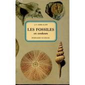Les Fossiles En Couleurs de Kirkaldy J., F.