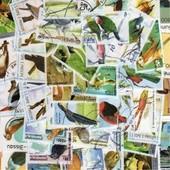 50 Timbres Oiseaux