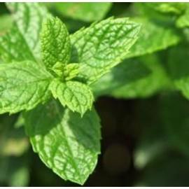 Huile Essentielle H.E.B.B.D. De Menthe Verte (Mentha Spicata)