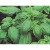 100 Graines Aromatiques - Basilic Grand Vert