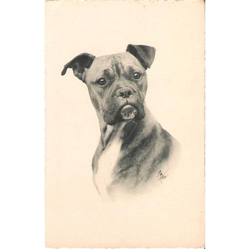 8c04970a7baa Cpa carte postale de chien tête de <strong>boxer</strong> raphaël
