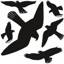 Herma Oiseaux De Vitres, Film, R�Sistant Aux Intemp�Ries,