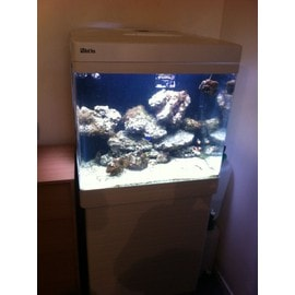 aquarium d'eau de mer complet