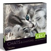 Calendrier Perp�tuel G�o Chats Et Chatons - 52 Photos