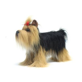 Yorkshire Terrier No.5909 (Japan Import)