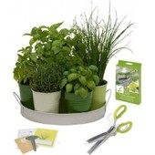 Kit Coupe Herbes Aromatiques