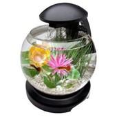 Aquarium Globe Avec Cascade De Tetra