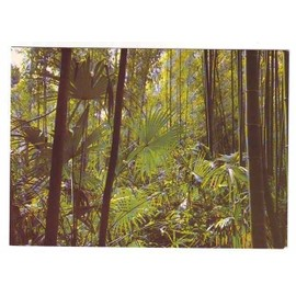 Anduze - Bambouseraie De Prafrance - Bambou Et Palmier