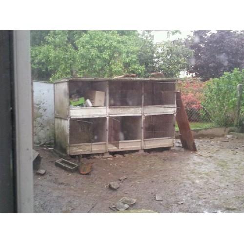 Clapier lapin beton pas cher ou d 39 occasion sur - Desactivant beton pas cher ...