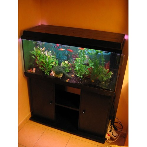 aquarium juwel rio. Black Bedroom Furniture Sets. Home Design Ideas