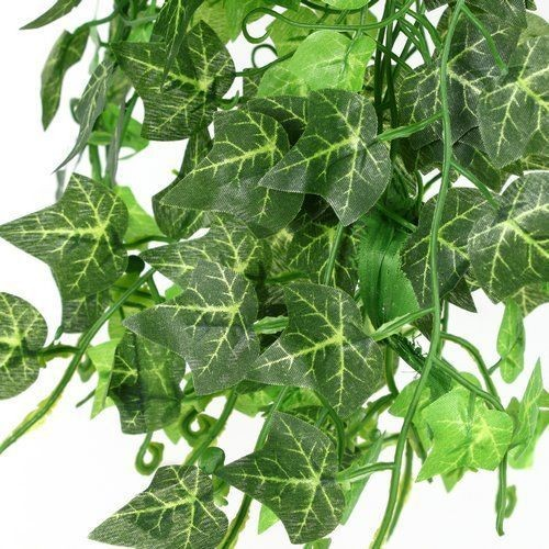 plante verte achat et vente neuf d 39 occasion sur priceminister rakuten. Black Bedroom Furniture Sets. Home Design Ideas