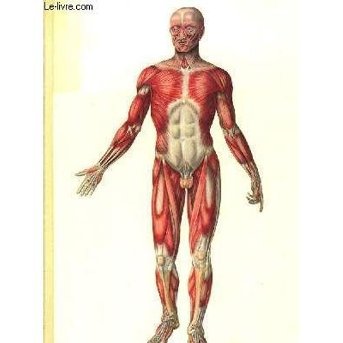 Anatomie photographique du corps humain de yokochi chihiro for Interieur du corps humain image