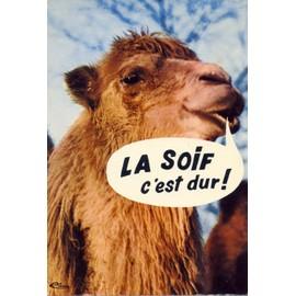 Animaux humoristiques le chameau ref an 65 achat et vente - Animaux humoristiques ...