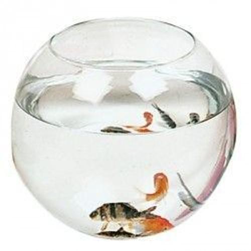 Aquarium boule zolux 4 5 litres achat et vente for Aquarium zolux
