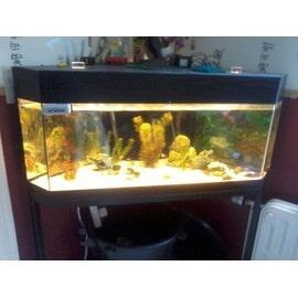 aquarium complet avec poisson pas cher achat vente priceminister. Black Bedroom Furniture Sets. Home Design Ideas