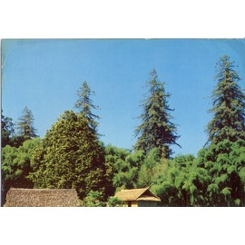 Bambouseraie De Prafrance � Anduze (Gard) S�auo�as Et Bambous G�ants