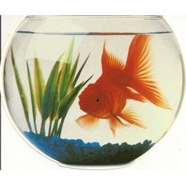 l 39 arc en ciel du bonheur le poisson rouge. Black Bedroom Furniture Sets. Home Design Ideas