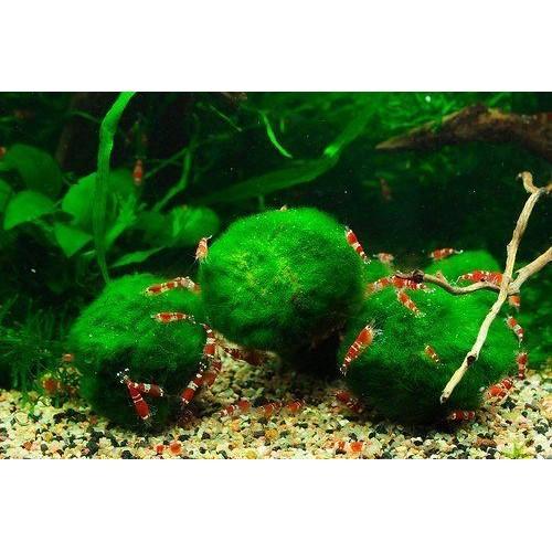 plante aquatique nitrate