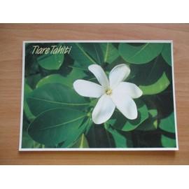 Cpm Tahiti La Fleur De Tiare Reste Le Symbole De L Accueil Tahitien