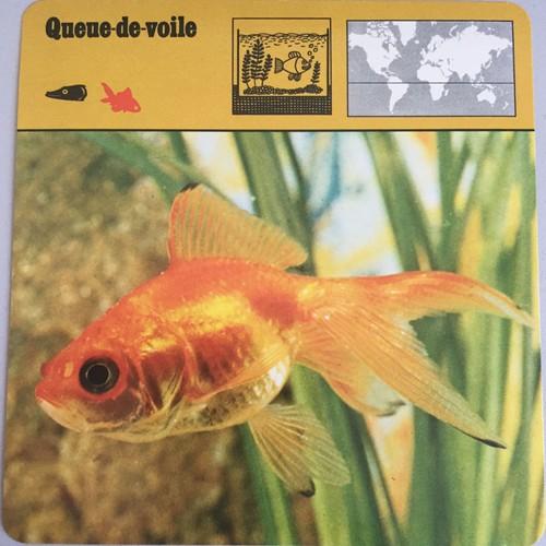 site de rencontre Goldfish gratuit nouveau site de rencontre sans paiement