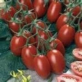 graines de tomate cerise coeur de pigeon rouge bio pas cher. Black Bedroom Furniture Sets. Home Design Ideas