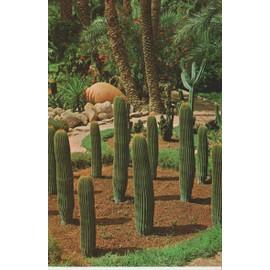 Jardin Du Curé : Rocaille- Plantes Vertes - Achat et vente - Rakuten