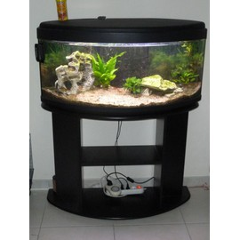 décoration aquarium animalis