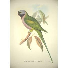 lithographie john gould palaeornis derbianus achat et vente. Black Bedroom Furniture Sets. Home Design Ideas